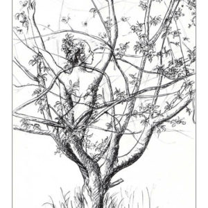 dessin fée Cerisier