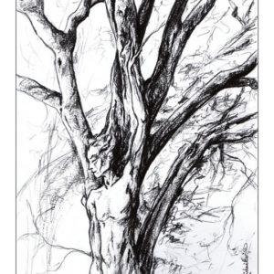 dessin fée Dryade